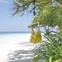 Hamaca - Iguana Hängstol - Lemon - Normalstora